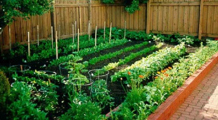 Vegetable Garden2